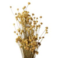 Bouquet-Natural-Espeta-Nariz