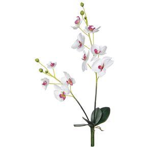 Cecile-Flor-Orquidea-Variado-Flores