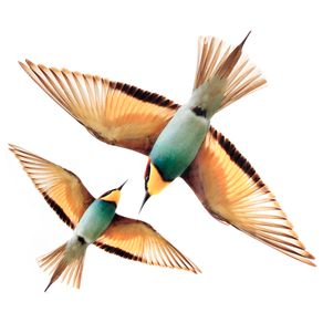 Adesivo-C-2-25-Cm-X-30-Cm-Multicor-Flying-Bird