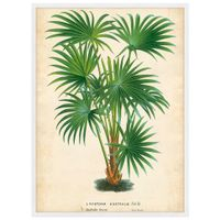 Palm-Of-The-Trop-Ii-Quadro-35-Cm-X-50-Cm-Multicor-branco-Galeria-Site