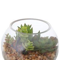 Terrario-Suculenta-Arranjo-Incolor-verde-Arid
