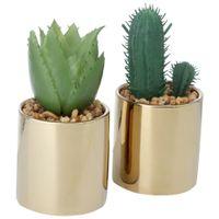 Cacto-Cereus-Mini-Arranjo-Ouro-verde-Riquez