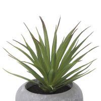 Suculenta-Aloe-Mini-Arranjo-Konkret-verde-Beton-Rara