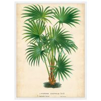 Palm-Of-The-Trop-Ii-Quadro-56-Cm-X-76-Cm-Multicor-branco-Galeria-Site