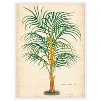 Palm-Of-The-Trop-I-Quadro-56-Cm-X-76-Cm-Multicor-branco-Galeria-Site