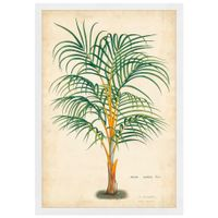 Palm-Of-The-Trop-I-Quadro-35-Cm-X-50-Cm-Multicor-branco-Galeria-Site
