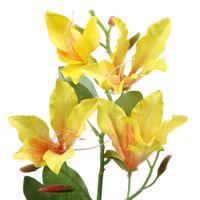 Flor-Bauhinia-Amarelo-verde-Ammi