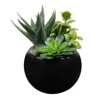 Terrarium-Suculentas--3vrd-Preto-verde-Arranjo