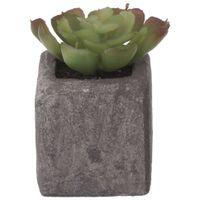 Suculenta-Echeveria-Mini-Arranjo-Grafite-verde-Yukatan