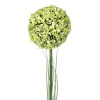 Delicato-Cidreira-verde-Bouquet