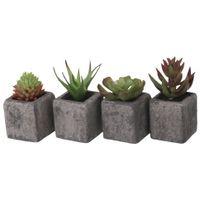 Suculenta-Aloe-Mini-Arranjo-Grafite-verde-Yukatan