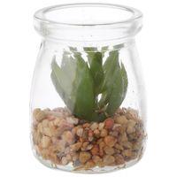Suculenta-Sedum-Mini-Arranjo-Incolor-verde-Arid