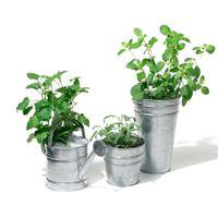 Vaso-28-Cm-Zinco-Botany
