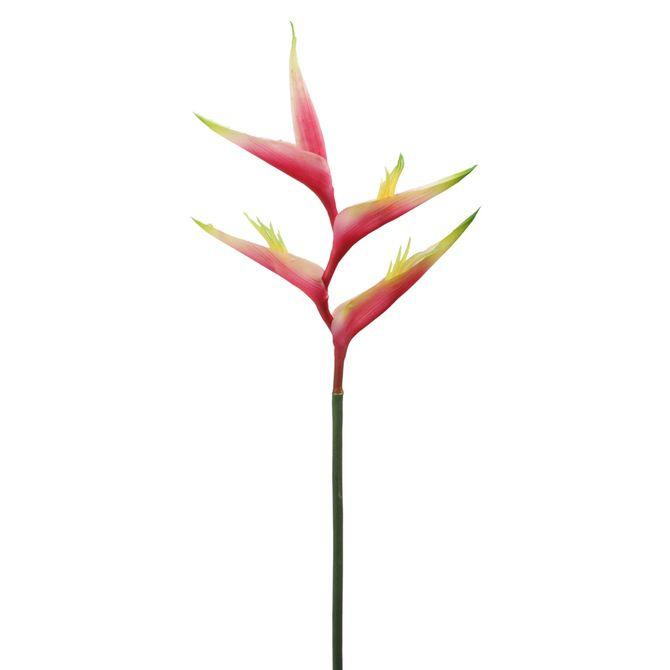 Flor-Estrelicia-Vermelho-verde-Alvorada