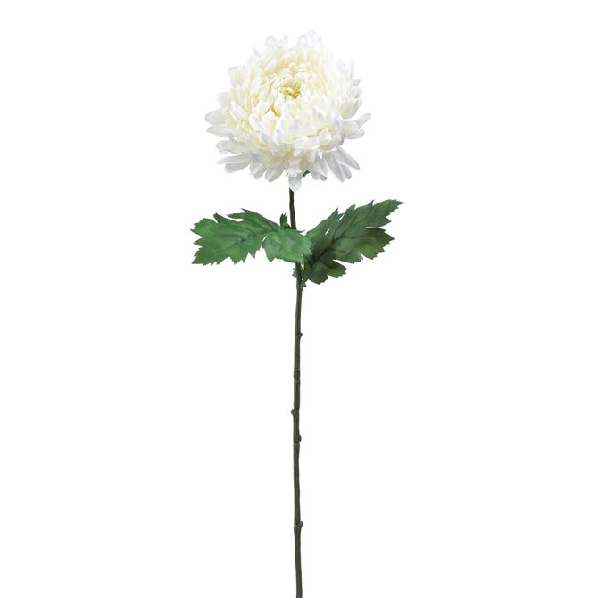 Flor-Calendula-Branco-verde-Solar