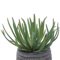 Suculenta-Arranjo-18-Cm-Konkret-verde-Beton
