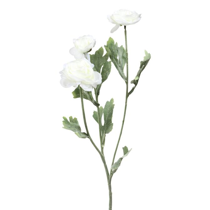 Flor-Mini-Ranunculus-Branco-verde-Lelly