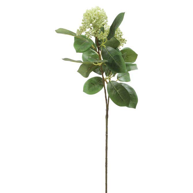 Flor-Viburno-Verde-Claro-verde-Camponesa
