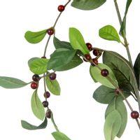Red-Berry--C-fruto-Vermelho-Hindu-verde-Folhagem