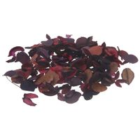 Pot-pourri-Rosa-Claro-multicor-Florata