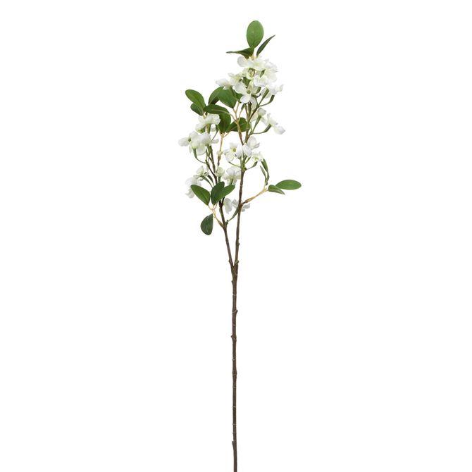 Flor-Euphorbia-Branco-verde-Nina