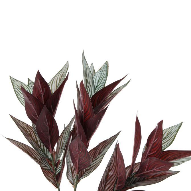 Folhagem-Verde-marrom-Calateia
