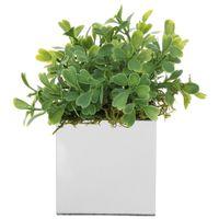 Buxinho-Mini-Arranjo-Prata-verde-Esplendor