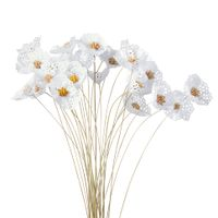 Bouquet-Natural-branco-Bellis