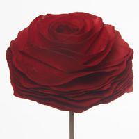 Laminas-Rosa-Flor-G-Vermelho-Hindu-Laminas