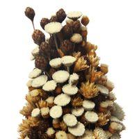 Arranjo-Pinha-Natural-multicor-Galheiros
