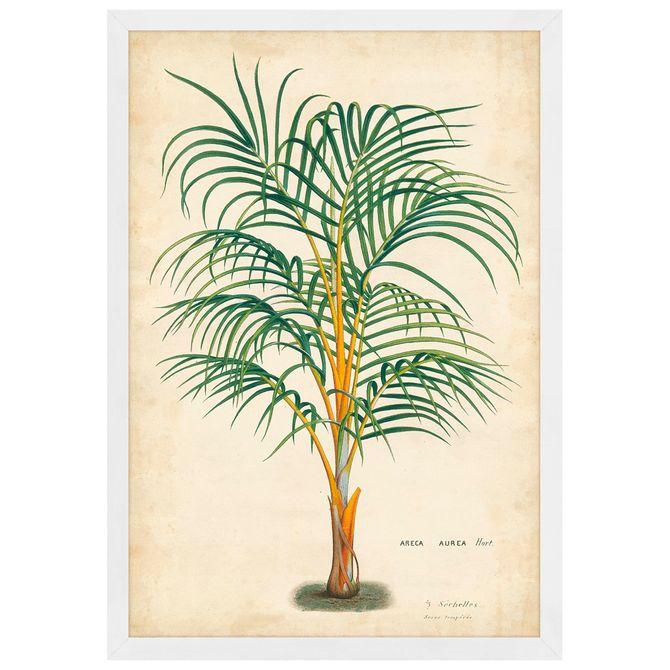 Palm-Of-The-Trop-I-Quadro-35-Cm-X-50-Cm-Multicor-branco-Galeria-Site