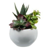 Terrarium-Suculentas--3vrd-Branco-verde-Arranjo