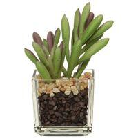 Mini-Giardino-Suculenta--3vrd-Verde-incolor-Arranjo
