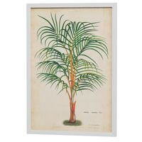 Palm of the trop i quadro 35 cm x 50 cm